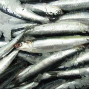 Anchoas de Hondarribia